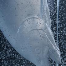 Sculpture en pâte de verre réalisé par Patrick Chaland, photographié au studio Alphaphoto